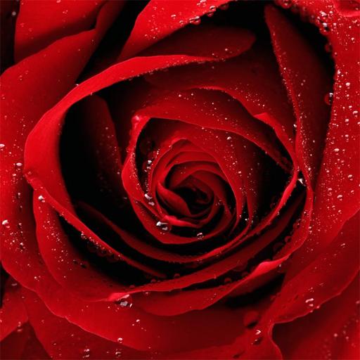 Yo Jigsaw Puzzle Roses