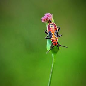 Loneliness by Wahyu Jr. Abadi - Animals Insects & Spiders ( tiny, orange, plants, geghans, little, surabaya, faunan, macro, nature, bugs, micro, small, natural, garden, closeup, mini, animal,  )
