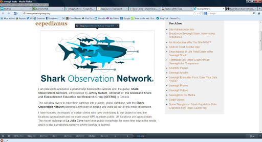 Shark Observer