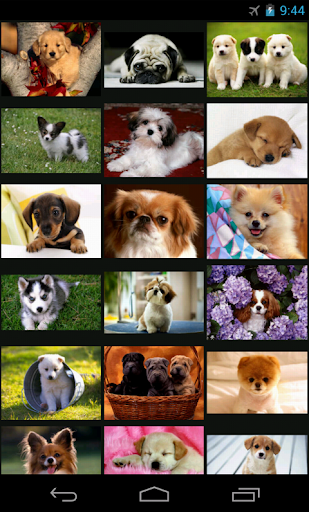 Baby Dogs - Wallpaper