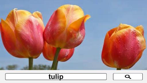 【免費媒體與影片App】PICZAP - Simple Image Searcher-APP點子