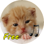call Cat 3.0 Icon
