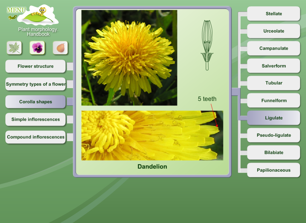 Biology - Plant Morphology - screenshot