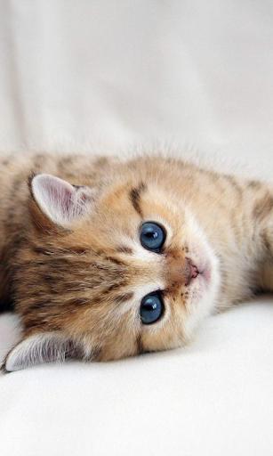 玩個人化App 有趣的小猫壁纸免費 APP試玩