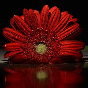 Flower by Sathyanarayanan Shanmugam - Flowers Single Flower ( flower,  )