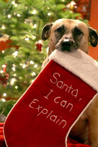 Love Christmas Puppy Pics - screenshot