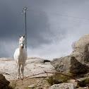 Caballo. Horse