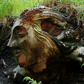 A face in the wood  by Ste D - Nature Up Close Other Natural Objects ( face, trunk, tree, grass, carving, wood, closeup, quality, detail, new, fresh, win, 2013, 2014,  )