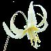 Oregon Wildflowers Icon