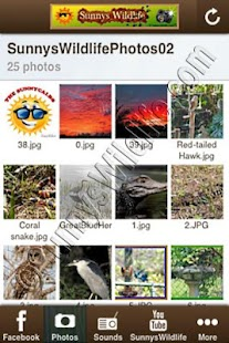 SunnysWildlife.com®- screenshot thumbnail