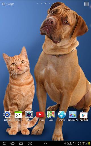 Cat Live Wallpaper 1.0.8 screenshots 12