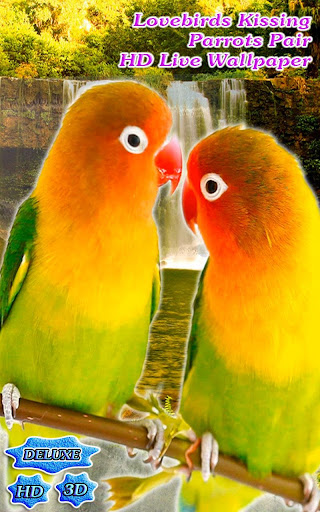 Lovebirds Kissing Parrots Pair