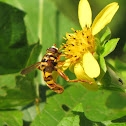 Yellow-jacket Hoverfly
