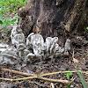 Ascomycetous Fungi