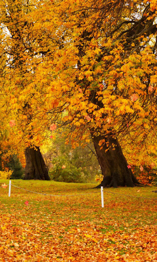 Autumn Wallpaper screenshots 4
