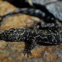 Granite night lizard