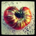 Tomato (Parker's Whopper)