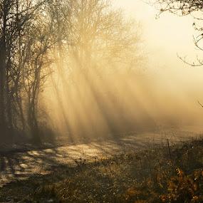 Pe drumul luminii by Geanina Boureanu - Landscapes Sunsets & Sunrises