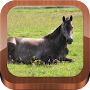 100 things your horse wants APK icon
