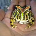 Bell horned frog