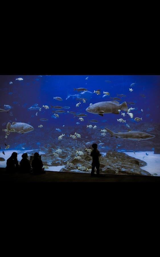 shark aquarium live wallpaper - photo #14