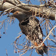 Birds of the National Parks - Adventure Bus tours