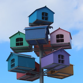 Bird houses by Alin Gavriluta - Artistic Objects Other Objects ( bird, houses, colorful,  )