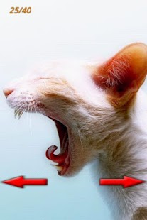 Funny Cats Pictures 2 - screenshot thumbnail