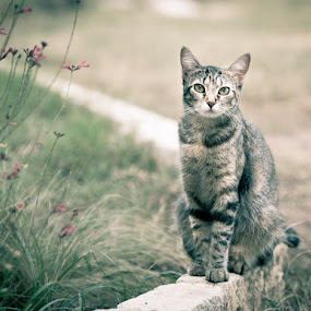 Cat Pose by Bob Barrett - Animals - Cats Portraits ( cat, cat eyes, garden, portrait )