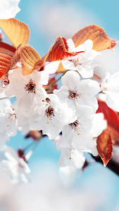Spring Wallpapers for Chat screenshot 0