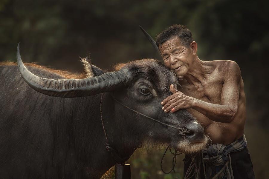 by Jakkree Thampitakkul - Uncategorized All Uncategorized ( love, tropicalpeople, #showusyourpets, home, buffalow, animals, tropical, thailand, tropicalweather, travel, #garyfongpets )