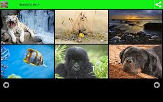 Screenshot of Beautiful Animal Wallpapers
