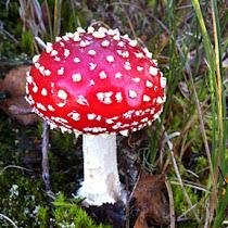 Fungi in the Benelux