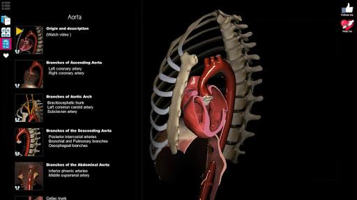 Anatomy Learning - 3D Atlas 2.1 screenshots 17