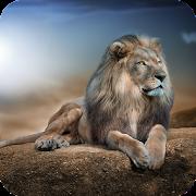 Leones Hd Wallpaper Apps En Google Play