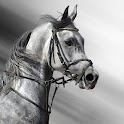 Black White Horse Wallpaper HD icon