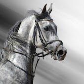 Black White Horse Wallpaper HD