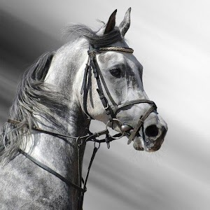 Black white horse wallpaper hd android apps on google play black white horse wallpaper hd voltagebd Gallery