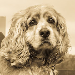 Tiopi by Trudy Gardner - Animals - Dogs Portraits