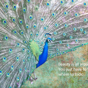 by Leah N - Typography Captioned Photos ( blue, green, beauty, bird photography, peacock )