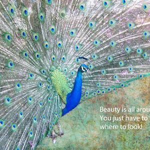 peacock beautiful_edited-1.jpg