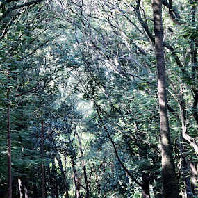 by Shajedul Azad - Landscapes Forests