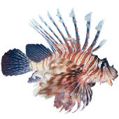 Lionfish Sticker