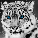Snow Leopard Live Wallpaper icon