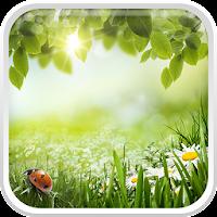 Green Spring Live Wallpaper