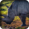 Rhino Wallpapers icon