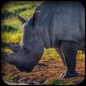 Rhino Wallpapers