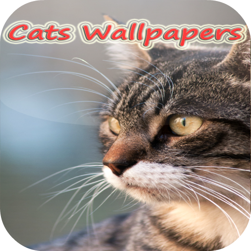 Galaxy s3 Cats live Wallpapers 個人化 App LOGO-APP試玩