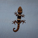 Mocquard's Madagascar Ground Gecko