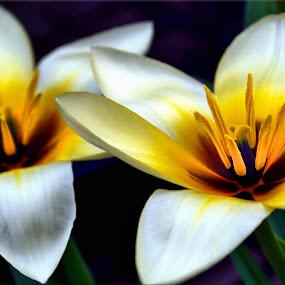 unusual flowers by Nic Scott - Flowers Flower Gardens ( nature, plants, flowers,  )